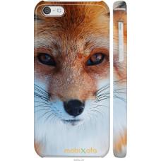 Чехол на iPhone 5c Рыжая лисица