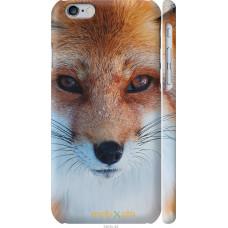 Чехол на iPhone 6 Рыжая лисица
