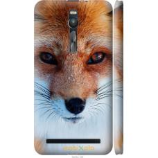 Чехол на Asus Zenfone 2 ZE551ML Рыжая лисица