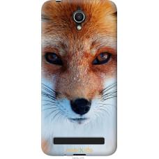 Чехол на Asus ZenFone Go ZC451TG Рыжая лисица