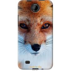 Чехол на HTC Desire 300 Рыжая лисица