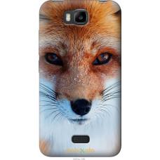 Чехол на Huawei Ascend Y5C Рыжая лисица