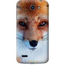 Чехол на Huawei G730 Рыжая лисица