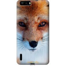 Чехол на Huawei Honor 6 Plus Рыжая лисица