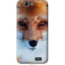 Чехол на Huawei Ascend G7 Рыжая лисица