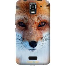 Чехол на Huawei Ascend Y3C Рыжая лисица