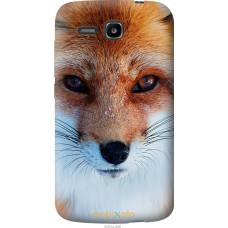Чехол на Huawei Ascend Y600 Рыжая лисица