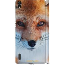 Чехол на Huawei Ascend P7 Рыжая лисица