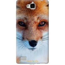 Чехол на Huawei Honor 3C Рыжая лисица