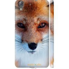 Чехол на Huawei Y6 II Рыжая лисица
