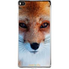 Чехол на Huawei Ascend P8 Рыжая лисица