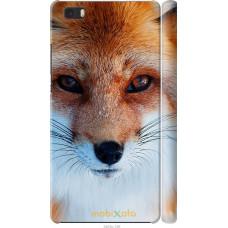 Чехол на Huawei Ascend P8 Lite Рыжая лисица