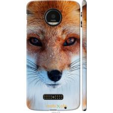 Чехол на Motorola MOTO Z Рыжая лисица