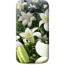 Чехол на Samsung Galaxy Star Plus S7262 Лилии белые