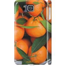 Чехол на Samsung Galaxy Alpha G850F Мандарины