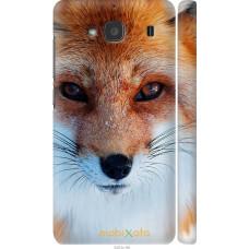 Чехол на Xiaomi Redmi 2 Рыжая лисица